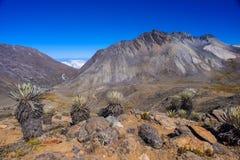 Paesaggio tropicale delle Ande, Venezuela fotografie stock libere da diritti