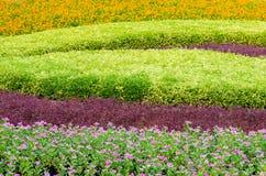 Paesaggio tropicale e fiore del bello albero delle piante ornamentali Fotografia Stock