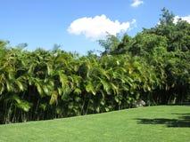 Paesaggio tropicale nel Messico Fotografia Stock Libera da Diritti