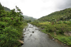Paesaggio tropicale nel modo a Bajawa Fotografie Stock Libere da Diritti