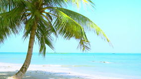 Paesaggio tropicale stupefacente della spiaggia con la palma, la sabbia bianca e le onde di oceano del turchese myanmar stock footage