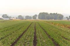 Paesaggio umido dell'azienda agricola Fotografia Stock