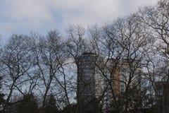 Paesaggio urbano Albero senza foglie sui precedenti della città e del cielo nuvoloso fotografia stock