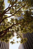 Paesaggio urbano con un albero fotografia stock libera da diritti