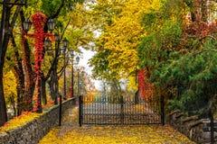 Paesaggio urbano di autunno con le lampade di via e del fogliame Immagine Stock