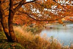 Paesaggio urbano di autunno, Seoul, Corea Fotografia Stock Libera da Diritti