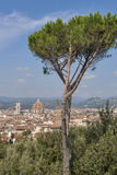 Paesaggio urbano di Firenze, Italia con la cattedrale del duomo ed il pino gentile Fotografia Stock Libera da Diritti