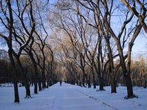 Paesaggio urbano di inverno Viale nel parco yekaterinburg dicembre Fotografie Stock Libere da Diritti