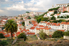 Paesaggio urbano di Lisbona con la palma Immagini Stock Libere da Diritti
