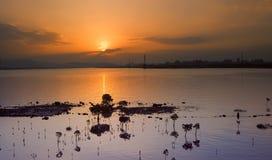 Paesaggio urbano drammatico di alba con il candel di kandelia fotografie stock libere da diritti