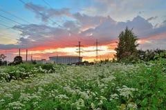 Paesaggio urbano - linea elettrica ad alta tensione della SKK St Petersburg più Immagine Stock Libera da Diritti