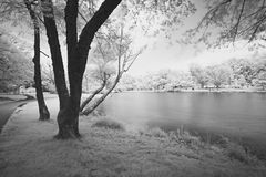 Paesaggio vago infrarosso Immagini Stock