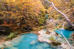 Paesaggio variopinto alla fonte di urederra, Spagna di autunno Fotografia Stock