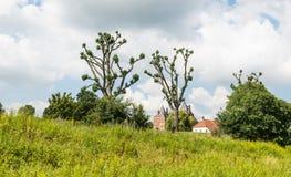Paesaggio variopinto con gli alberi stranamente a forma di Fotografia Stock