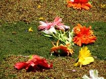 Paesaggio variopinto dei fiori dimenticati Fotografie Stock