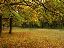 Paesaggio variopinto di autunno con giallo e gli alberi Sfondo naturale della foresta della quercia Immagini Stock Libere da Diritti