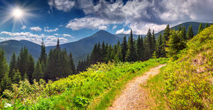 Paesaggio variopinto di estate in montagne Immagine Stock
