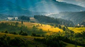 Paesaggio variopinto di estate nelle montagne carpatiche L'Ucraina, Europa Fotografie Stock Libere da Diritti