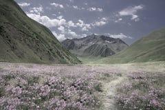 Paesaggio variopinto in Georgia fotografia stock libera da diritti
