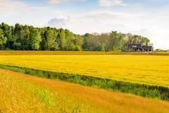 Paesaggio variopinto in un'area olandese di recente creazione del ploder Immagini Stock