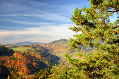 Paesaggio variopinto vibrante di autunno nella luce del giorno Immagini Stock