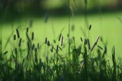 Paesaggio verde Fotografie Stock