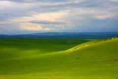 Paesaggio verde - campi Fotografia Stock