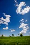 Paesaggio verde con cielo blu Fotografia Stock