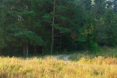 Paesaggio verde conifero della foresta con il percorso ed il campo Immagine Stock