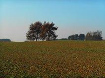 Paesaggio verde del campo Fotografia Stock