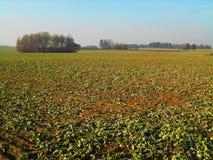 Paesaggio verde del campo Fotografia Stock Libera da Diritti