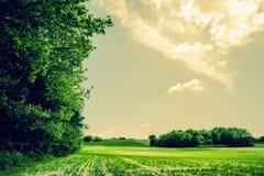 Paesaggio verde del campo con gli alberi ed il sole Immagini Stock Libere da Diritti