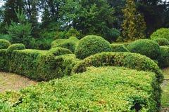 paesaggio verde dell'arboreto nella città di Kiev Fotografie Stock
