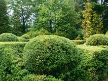 paesaggio verde dell'arboreto nella città di Kiev Immagine Stock
