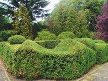 paesaggio verde dell'arboreto nella città di Kiev Immagini Stock