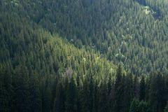 Paesaggio verde della foresta fotografia stock libera da diritti