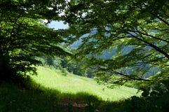 Paesaggio verde della foresta Fotografia Stock