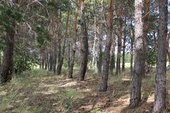 Paesaggio verde della foresta Immagine Stock