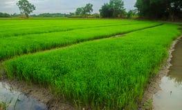 Paesaggio verde di agricoltura del campo Fotografia Stock Libera da Diritti