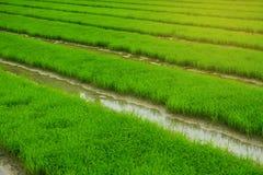 Paesaggio verde di agricoltura del campo Immagine Stock