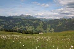 Paesaggio verde di estate nel Bernese Oberland Immagini Stock