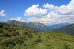 Paesaggio verde di estate nel Bernese Oberland Fotografie Stock Libere da Diritti