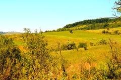 Paesaggio verde di estate nella Transilvania Fotografia Stock Libera da Diritti