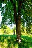 Paesaggio verde di estate nella Transilvania Immagini Stock Libere da Diritti