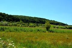 Paesaggio verde di estate nella Transilvania Immagine Stock Libera da Diritti