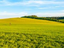 Paesaggio verde di panorama del campo Vista panoramica in primavera che uguaglia Fotografia Stock
