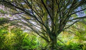 Paesaggio verde intenso compreso un albero con molti rami immagini stock libere da diritti