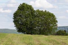 paesaggio verde a primavera alla campagna del sud della Germania fotografie stock libere da diritti