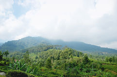 Paesaggio verde in un picco nebbioso Immagine Stock