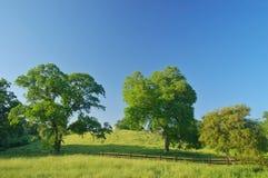 Paesaggio verdeggiante della sorgente Immagine Stock
